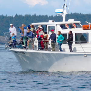 Things to do San Juan Island: Whale Watching